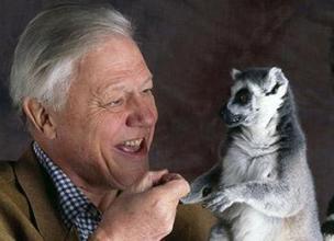 David Attenborough's Career