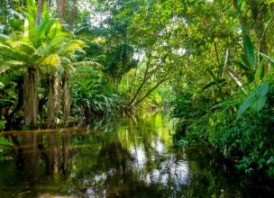 Amazon Rainforest –8 Things You Probably Didn't know