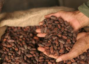 Cacao – The Gold Worthy Chocolate