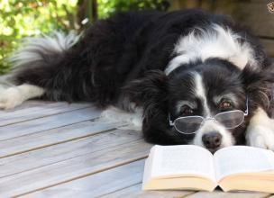 Top 5 Most Intelligent Dogs