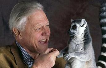 David Attenborough's Career