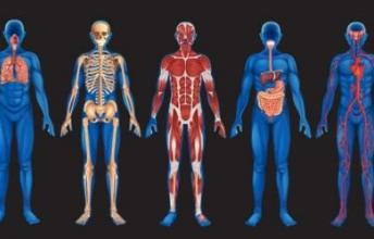 The Mysteries of Human Body