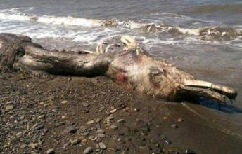 This Bizarre Sea Creature Just Washed Up On The Shores Of Russia