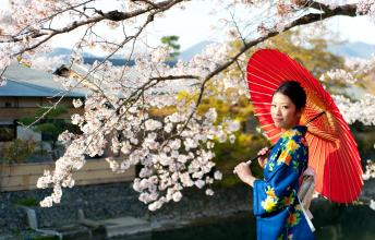Japan - The home of world's most beautiful festivals including Cherry Blossom Lantern Festival