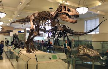 American Museum of Natural History - The Best