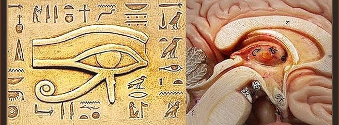 How to Detoxify the Pineal Gland