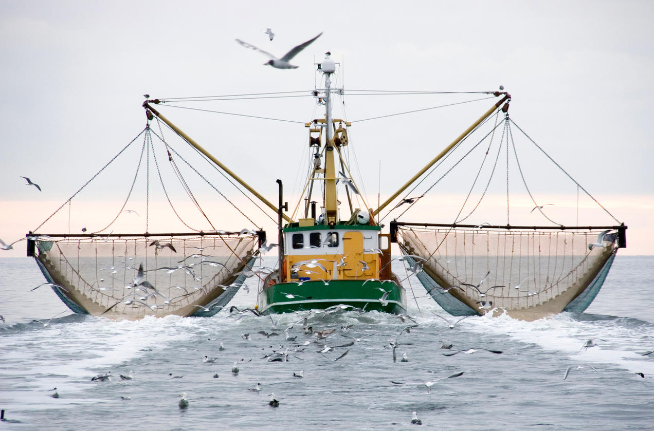 Overfishing - Putting the entire ocean system at risk