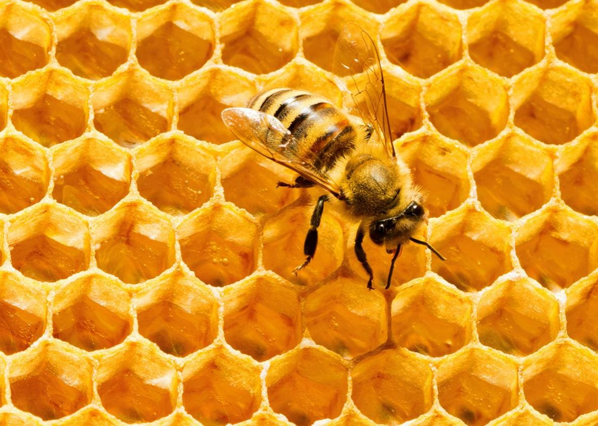 The Hexagon – Nature's Most Powerful Creation