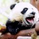PandaLife